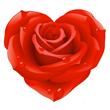 bigrose_heart