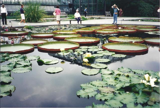 Longwood Garden 8