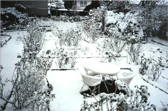 LM Garden in Winter