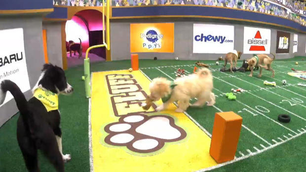 puppy-bowl-touchdown-620
