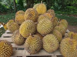 Durian by smithsonianmag.com